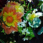 dahlias british flowers florist lancashire
